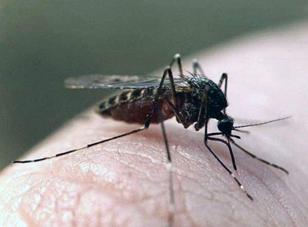 Избавляйтесь от насекомых с помощью продуктов