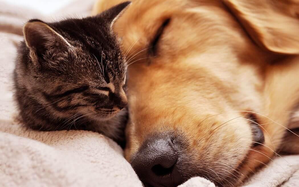 Кто умнее: кошки или собаки?