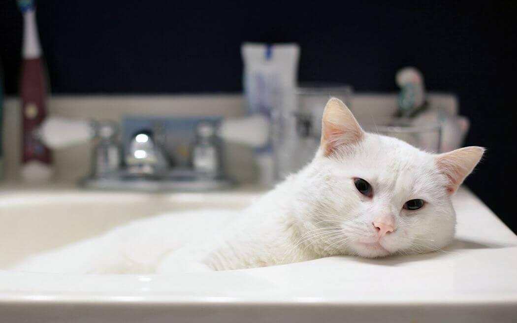 Как правильно помыть кота